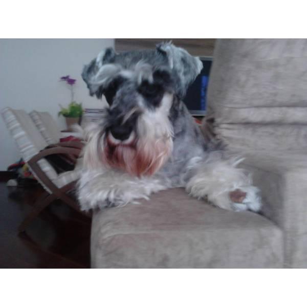 Onde Achar Adestradores para Cachorro em Perdizes - Adestrador de Cães