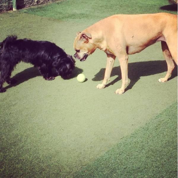 Onde Achar Adestradores para Cães em Perdizes - Adestrador de Cãesna Vila Olímpia