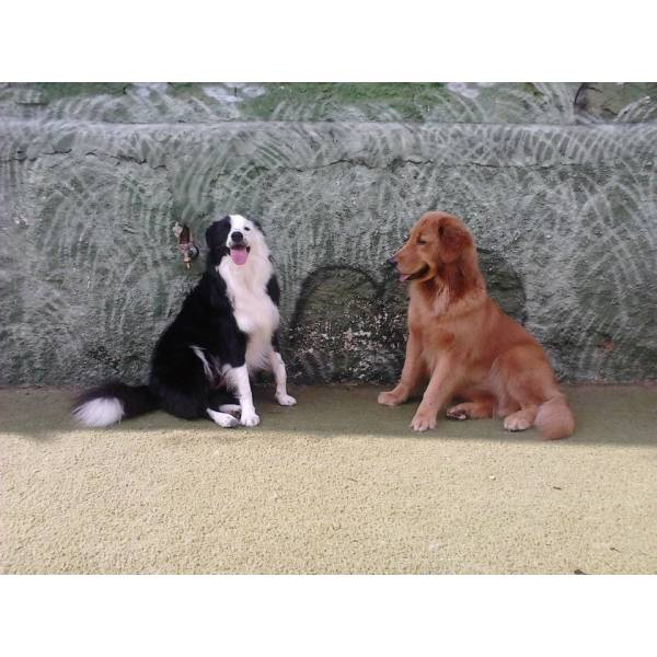 Onde Achar Adestradores para Cães no Pacaembu - Empresa de Adestradores