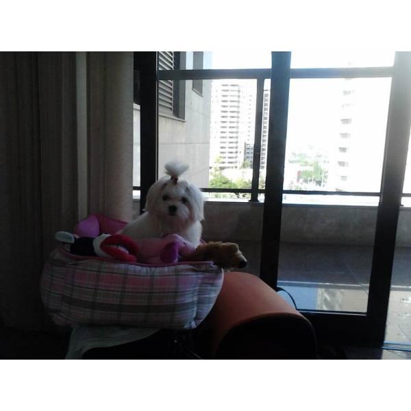 Onde Achar Adestradores para Cão em São Lourenço da Serra - Empresa de Adestradores
