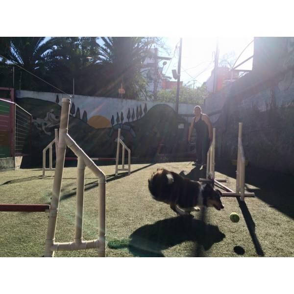Onde Achar Adestramento de Cachorro em Taboão da Serra - Serviço de Adestramento de Cães