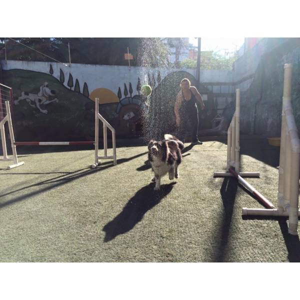 Onde Achar Adestramento de Cachorros no Brooklin - Adestramento de Cães na Zona Oeste
