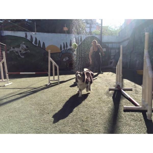 Onde Achar Adestramento de Cachorros no Sacomã - Adestramento de Cães em SP
