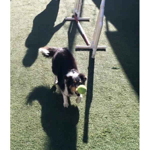 Onde Achar Adestramento de Cão na Cidade Jardim - Adestramento de Cão
