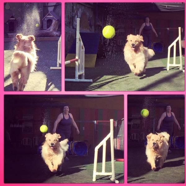 Onde Achar Adestramento para Cachorro no Jaguaré - Serviço de Adestramento de Cães