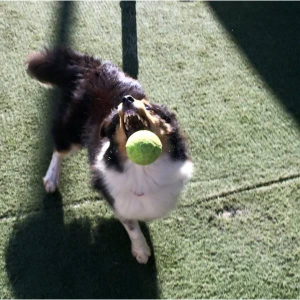 Onde Achar Adestramento para Cachorros na Saúde - Adestramento de Cães no Brooklin