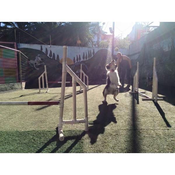 Onde Achar Adestramento para Cães no Jardim América - Adestramento de Cães na Zona Oeste
