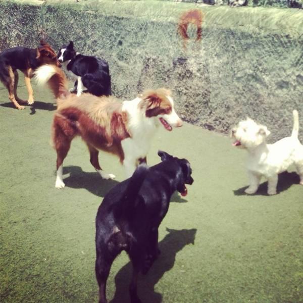 Onde Achar Daycare para Cachorros em Itapecerica da Serra - Daycare Cachorro