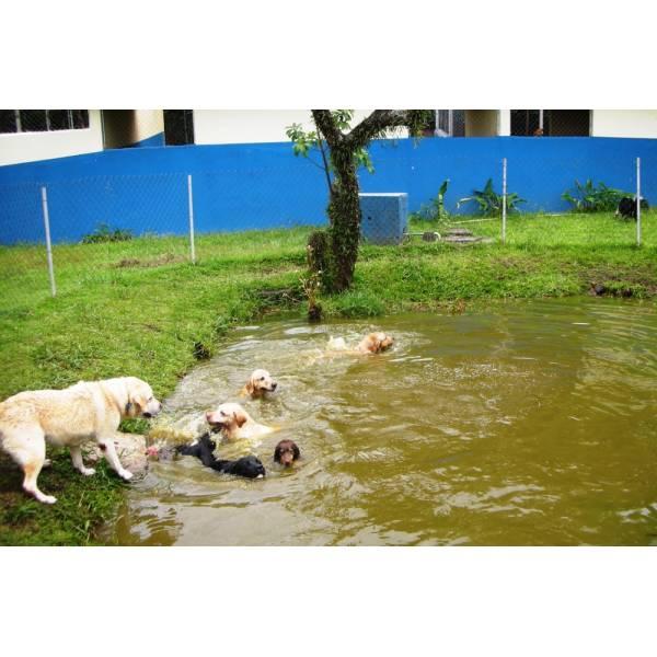 Onde Achar Hotéis para Cachorros no Jardim Europa - Hotel para Grandes Cachorros