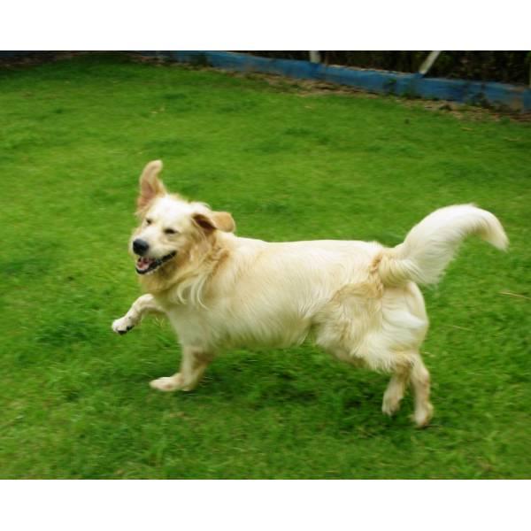 Onde Achar Hotel para Cachorros em Cotia - Hotel para Grandes Cachorros