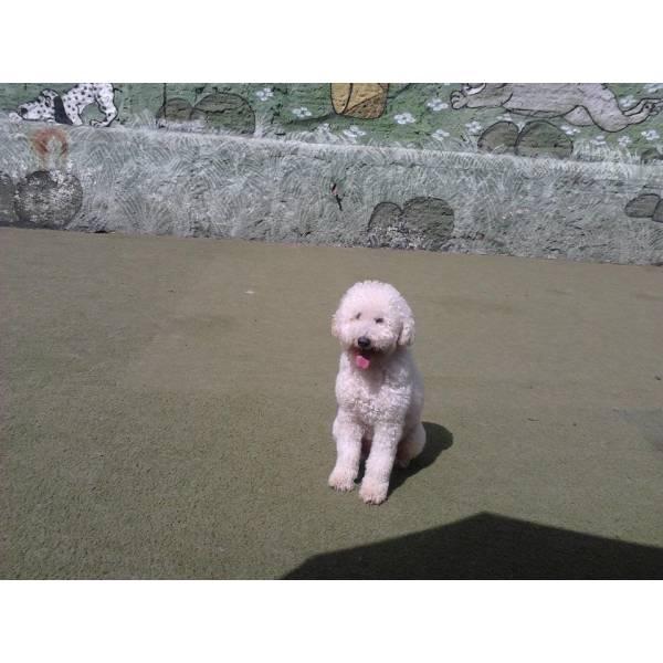 Onde Encontrar Adestrador para Cachorro no Ibirapuera - Serviço de Adestrador de Cachorro