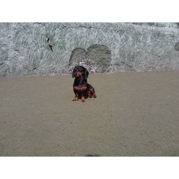 Onde Encontrar Adestrador para Cachorros em Jandira - Adestrador de Cães