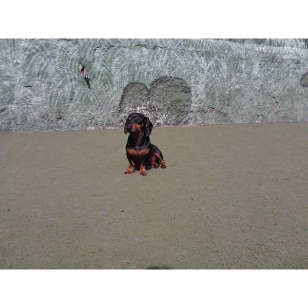 Onde Encontrar Adestrador para Cachorros em Sumaré - Adestrador de Cãesem São Paulo