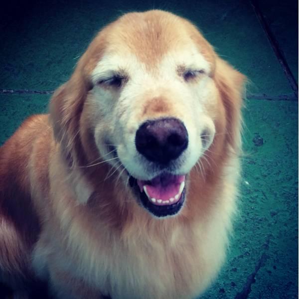 Onde Encontrar Adestrador para Cachorros no Brooklin - Adestrador de Cãesna Vila Olímpia
