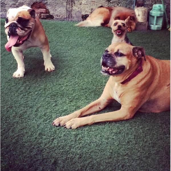 Onde Encontrar Adestrador para Cães no Morumbi - Adestrador de Cãesna Vila Olímpia