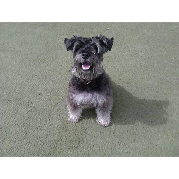 Onde Encontrar Adestrador para Cão no Brooklin - Adestrador Profissional de Cães
