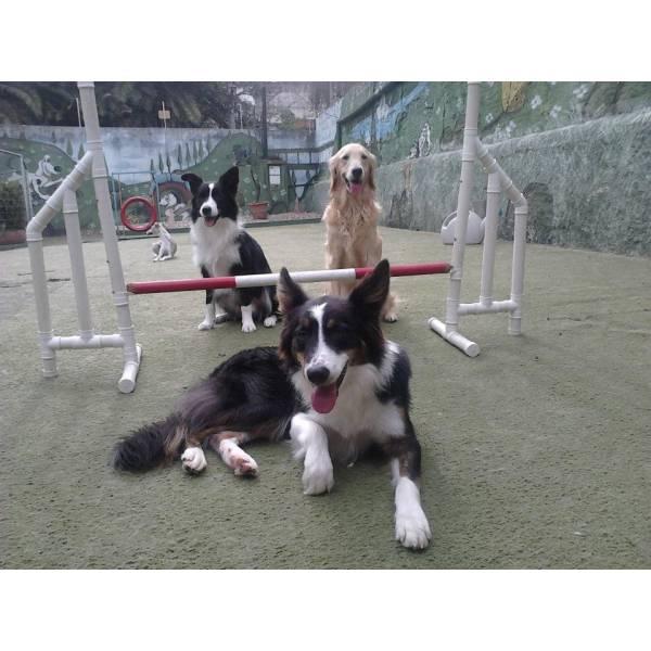 Onde Encontrar Adestradores para Cachorro em Santo Amaro - Serviço de Adestrador de Cachorro