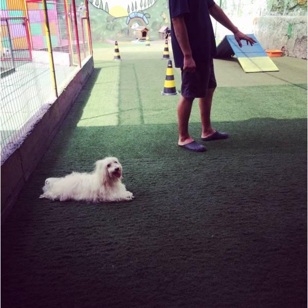 Onde Encontrar Adestradores para Cachorro na Cidade Jardim - Adestrador de Cãesna Vila Olímpia