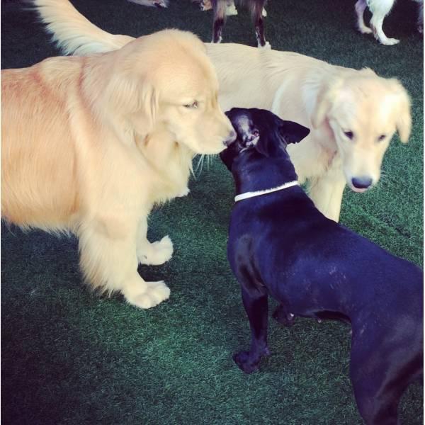 Onde Encontrar Adestradores para Cães no Jaguaré - Adestrador de Cãesna Vila Olímpia