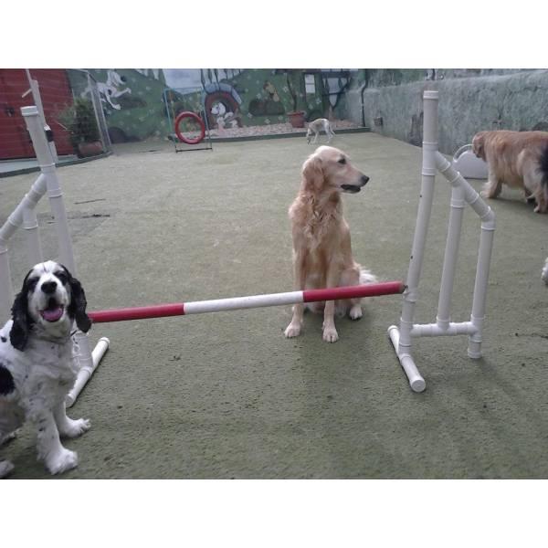 Onde Encontrar Adestradores para Cão em Itapecerica da Serra - Adestradores de Cães