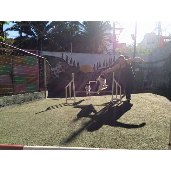 Onde Encontrar Adestramento de Cachorro em Cajamar - Serviço de Adestramento de Cães