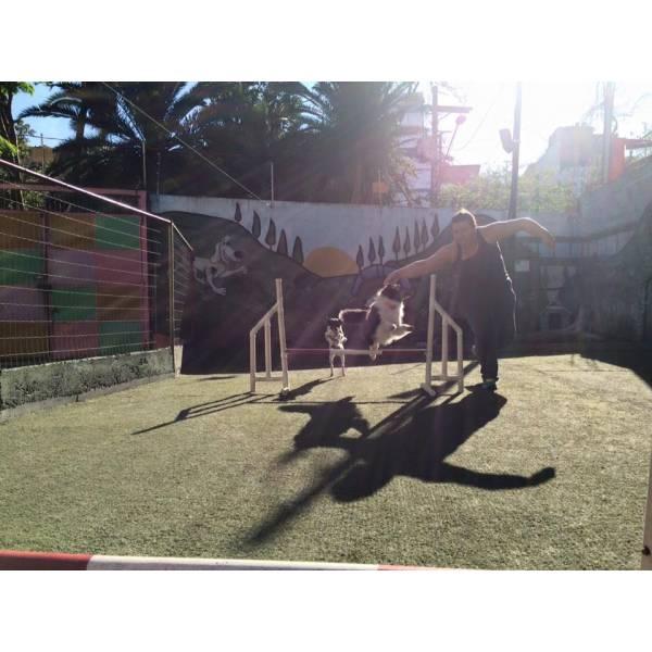 Onde Encontrar Adestramento de Cachorro no Jardim América - Adestramento de Cães na Zona Sul