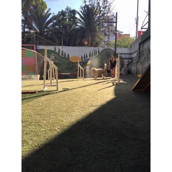 Onde Encontrar Adestramento de Cachorros em Vargem Grande Paulista - Adestramento de Cães na Zona Sul