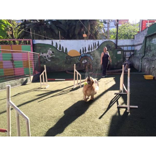 Onde Encontrar Adestramento de Cão na Vila Sônia - Adestramento de Cães na Zona Sul