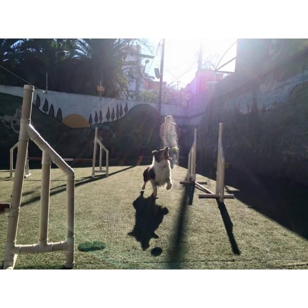 Onde Encontrar Adestramento para Cachorro no Jardim São Luiz - Adestramento de Cães na Zona Sul