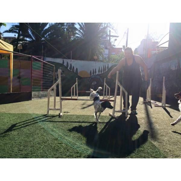 Onde Encontrar Adestramento para Cão em Osasco - Adestramento de Cães no Brooklin