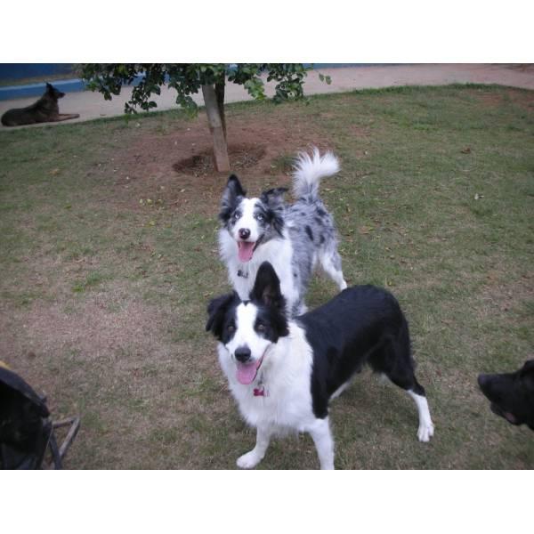 Onde Encontrar Hotéis de Cachorros em Embu das Artes - Hotel para Grandes Cachorros