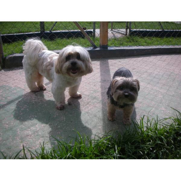 Onde Encontrar Hotéis de Cães em Carapicuíba - Hotel para Grandes Cachorros
