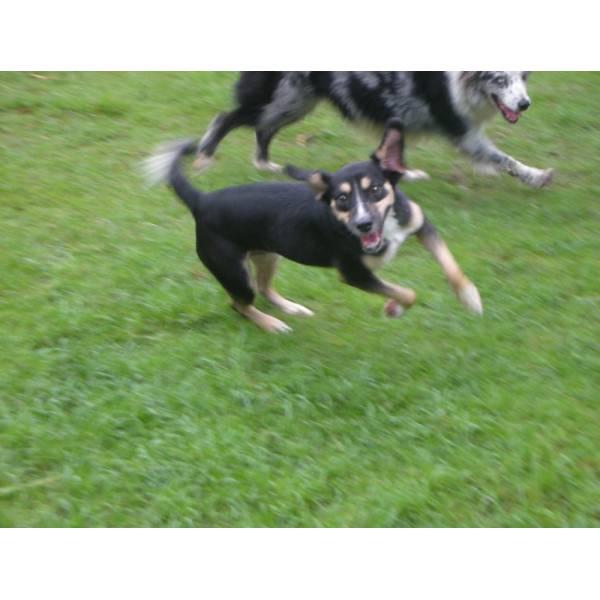 Onde Encontrar Hotéis para Cães em Perdizes - Hotel para Grandes Cachorros