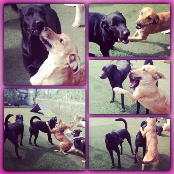 Onde Encontrar Hoteizinhos de Cão na Lapa - Hotelzinho para Cachorro em SP