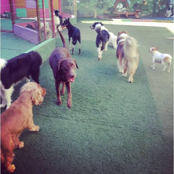 Onde Encontrar Hoteizinhos para Cães  na Cidade Ademar - Hotelzinho para Cachorro em SP