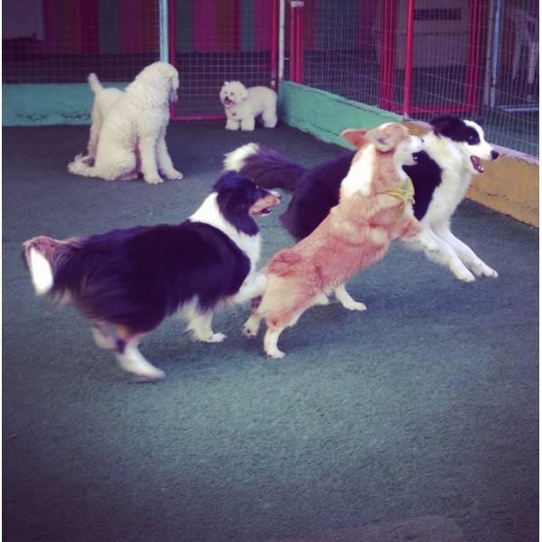 Onde Encontrar Hoteizinhos para Cão  em Perdizes - Hotelzinho para Cachorro em SP