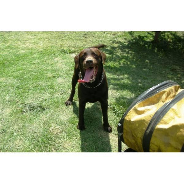 Onde Encontrar Hotel de Cães no Brooklin - Hotel para Grandes Cachorros