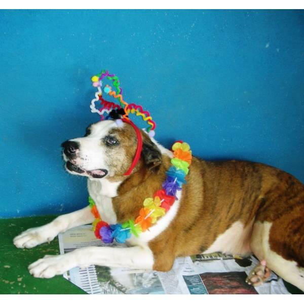 Onde Encontrar Hotel de Cão em Cotia - Hotel para Grandes Cachorros