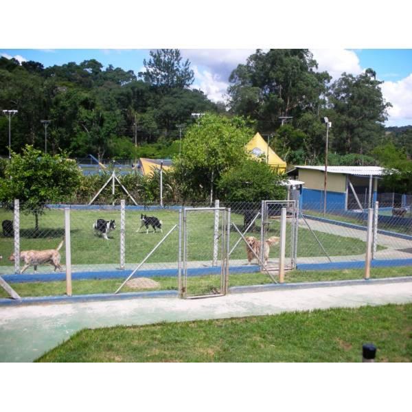 Onde Encontrar Hotel para Cães na Cidade Jardim - Hotel para Grandes Cachorros