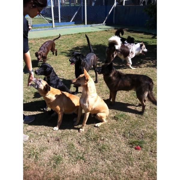 Onde Encontrar Hotel para Cão no Butantã - Hotéis para Cães