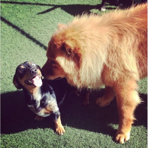 Onde Encontrar Hotelzinho de Cães  na Vila Leopoldina - Hotelzinho para Cachorro em SP