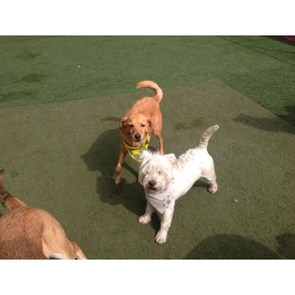 Onde Encontrar Hotelzinho de Cão  na Cidade Jardim - Hotelzinho para Cachorro em SP