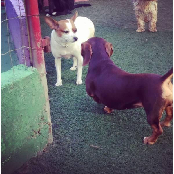 Onde Encontrar Hotelzinho para Cães em Carapicuíba - Hotelzinho para Cachorro em SP