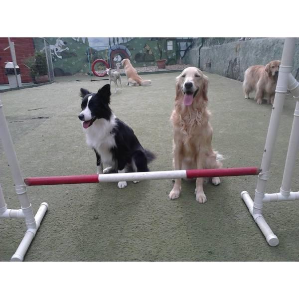 Onde Tem Adestrador para Cachorro em Interlagos - Adestrador de Cãesem SP
