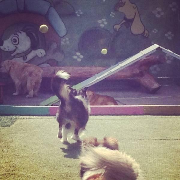 Onde Tem Adestrador para Cachorro em Perdizes - Adestrador de Cãesno Itaim Bibi