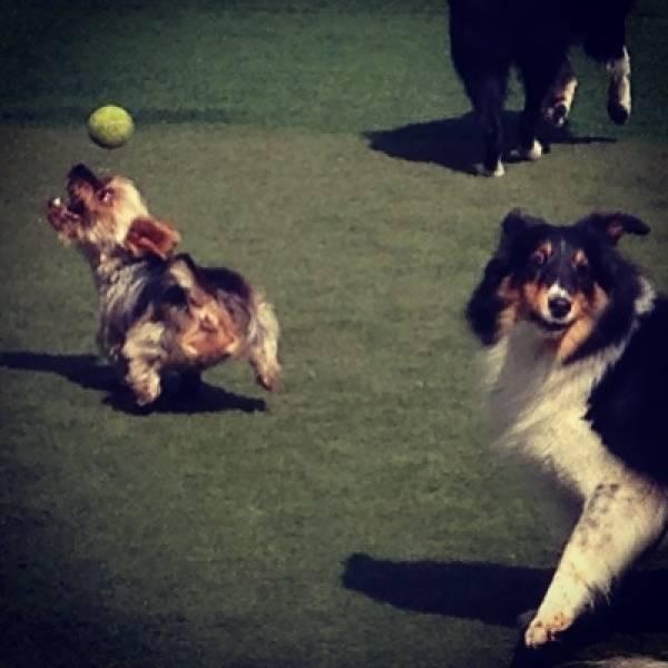 Onde Tem Adestrador para Cachorro no Campo Belo - Adestrador de Cãesno Itaim Bibi