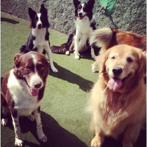 Onde Tem Adestrador para Cachorros em Alphaville - Adestrador de Cãesno Itaim Bibi