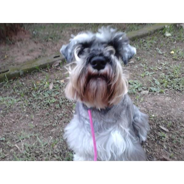 Onde Tem Adestrador para Cães em Santo Amaro - Adestrador Profissional de Cães