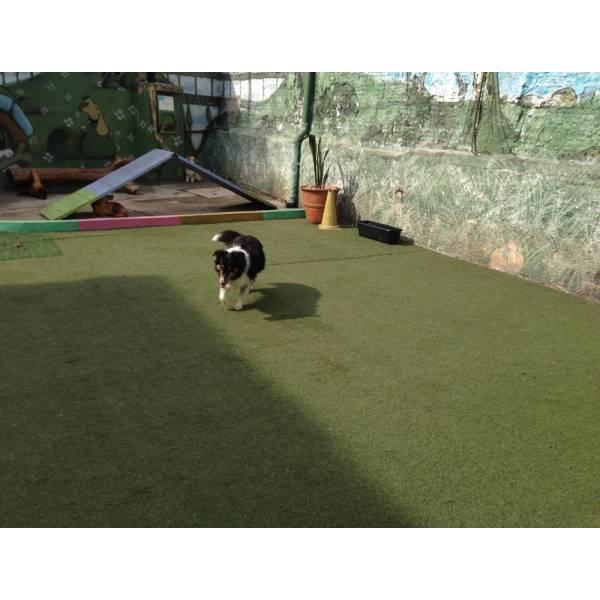 Onde Tem Adestrador para Cães no Pacaembu - Adestrador de Cãesno Itaim Bibi
