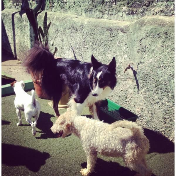 Onde Tem Adestrador para Cão no Jardim Bonfiglioli - Adestrador de Cãesno Itaim Bibi